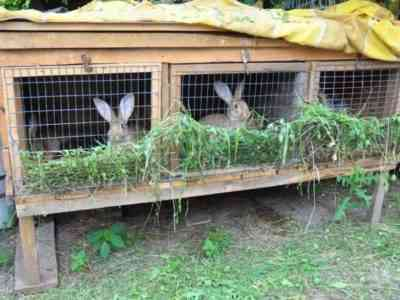 Outdoor rabbitry usually does not require additional ventilation