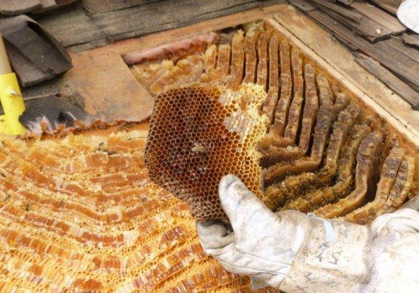 Bashkir honey: neat, how to distinguish it from a fake