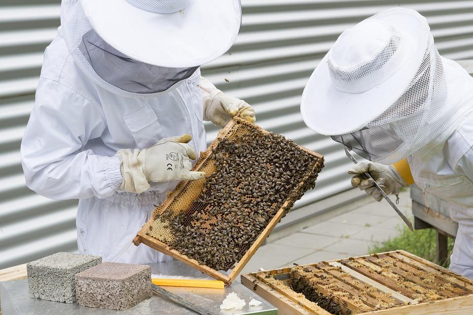 experienced beekeepers