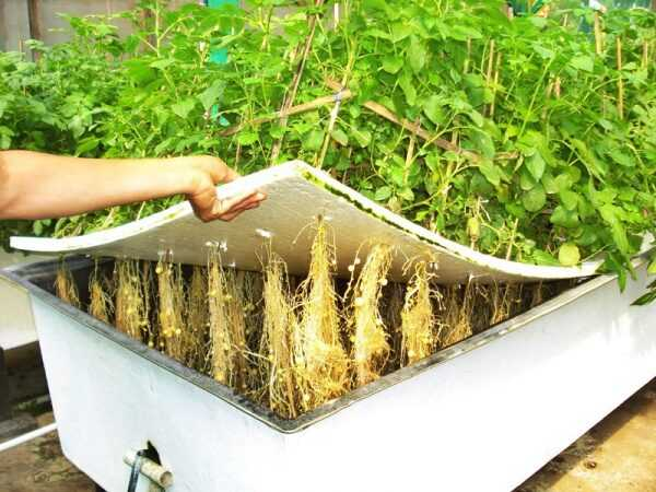Do-it-yourself aeroponics installation – what equipment is needed