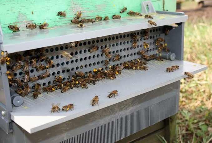pollen trap installation
