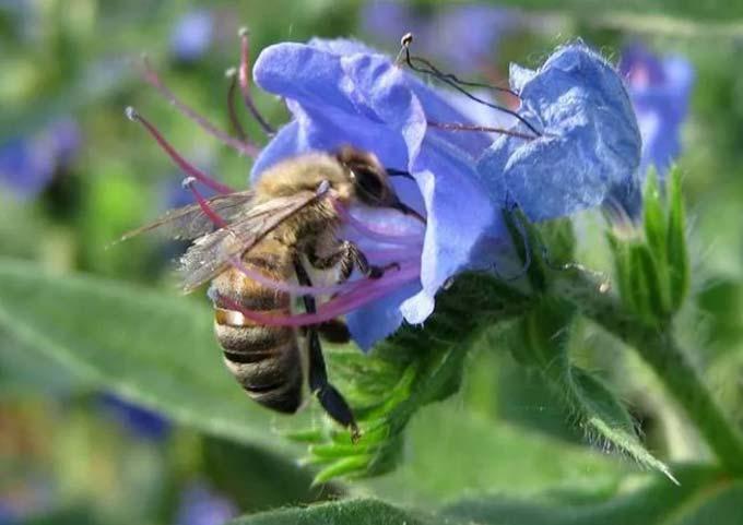 honey productivity