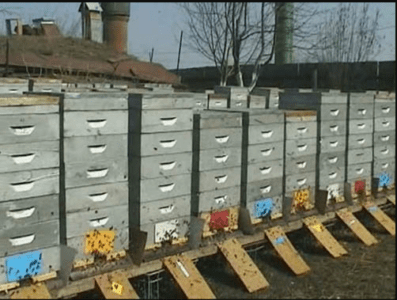 All about the Alpine hive and how to do it yourself