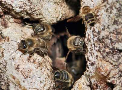 All about wild bees