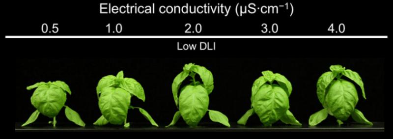 Electrical Conductivity – Hydroponics