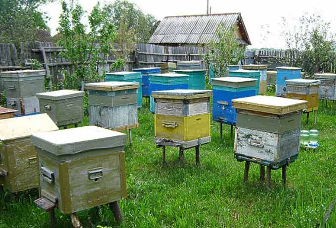 Bee apiary as a successful business
