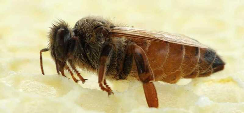 Bee family: composition and functions