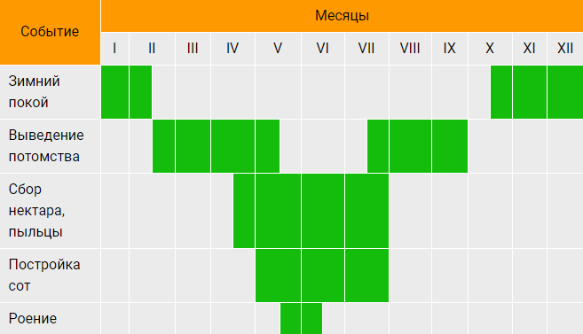 Bee activity throughout the year