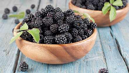 Blackberries, Calories, benefits and harms, Useful properties