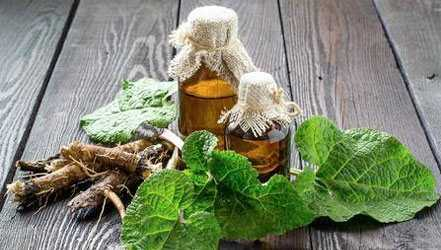Burdock, Calories, benefits and harms, Useful properties