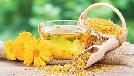 Calendula, Calories, benefits and harms, Useful properties
