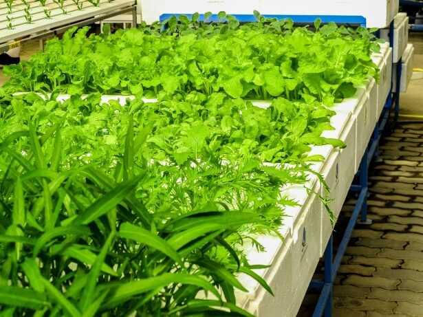 DIY ventilation system in a grow box