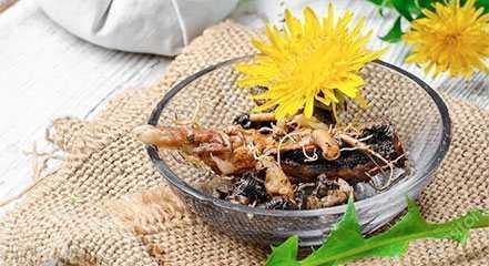 Dandelion, Calories, benefits and harms, Useful properties