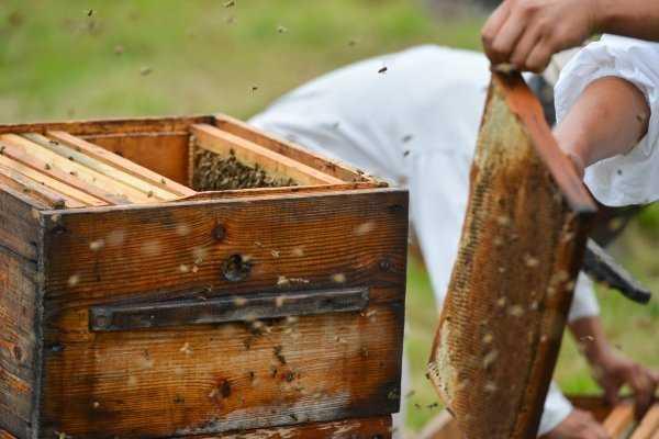 "Federal Law ""On Beekeeping"""