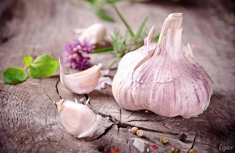 Garlic, Calories, benefits and harms, Benefits