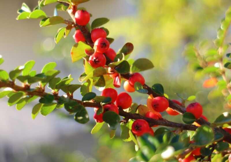 Hawthorn honey: useful properties and contraindications