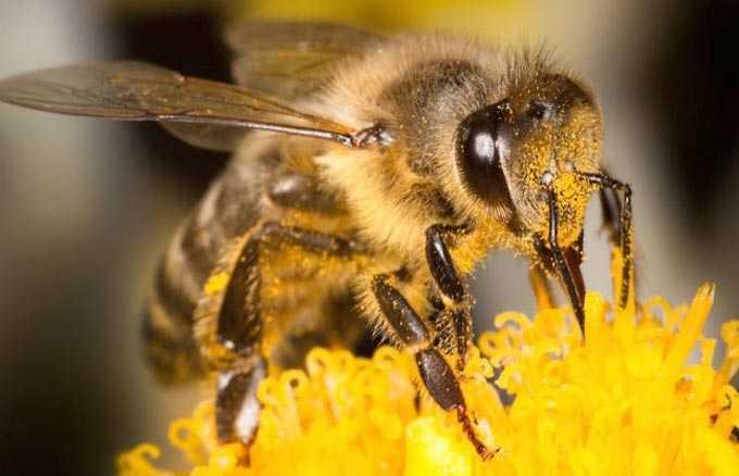 nectar collection