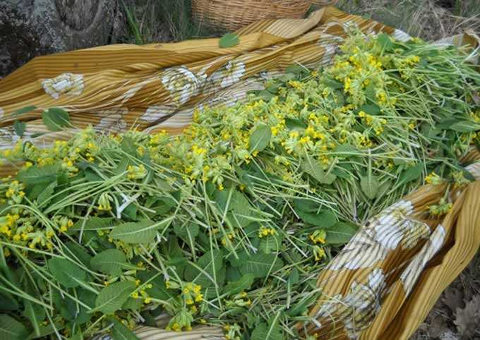 drying of herbs