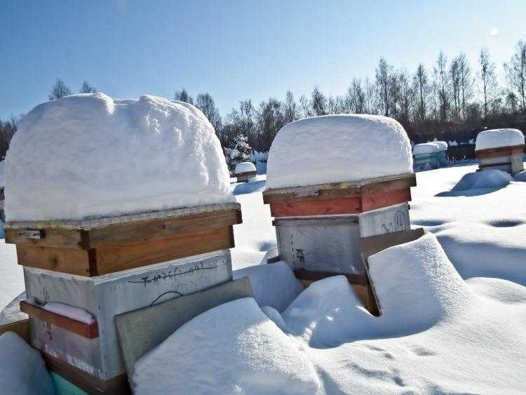 How do bees winter?