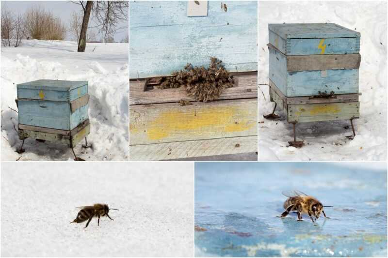 How is the spring flight of bees going?