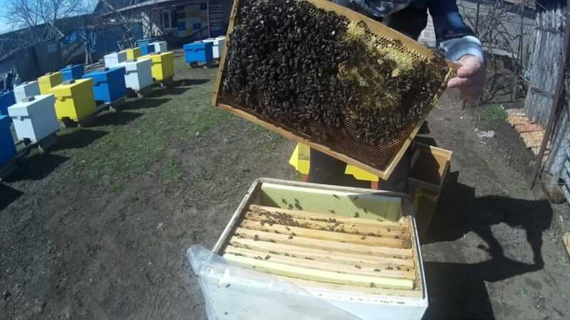 How to accelerate the development of bees in the spring?