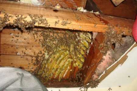 How to get rid of your neighbor's bees