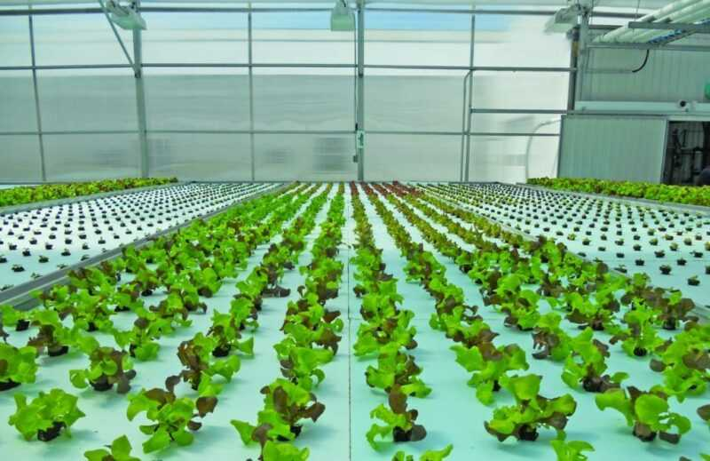Hydroponics at home: do it yourself greens