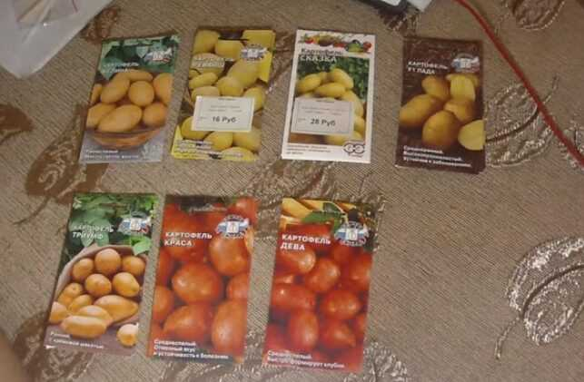 How to grow potatoes hydroponically at home