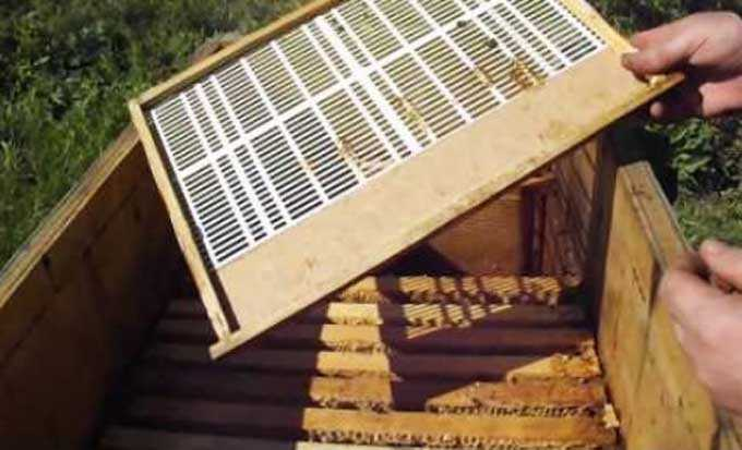 How to remove a queen in a hive-bed without orphaning a bee colony