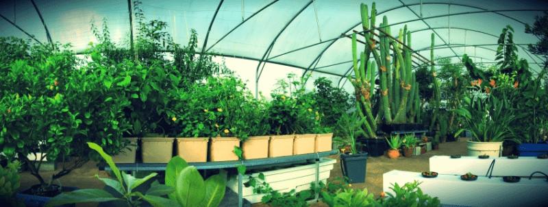 Indoor Growing – Hydroponics