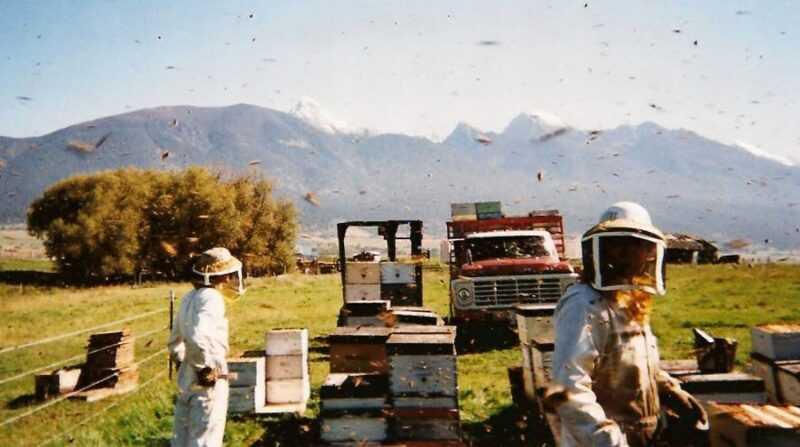 Industrial beekeeping: features
