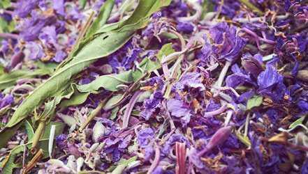 Ivan tea, Calories, benefits and harms, Useful properties