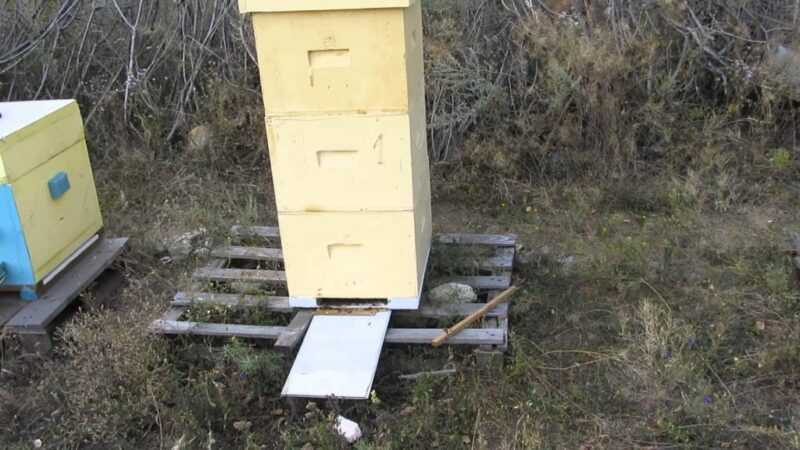 Making hives from expanded polystyrene and polyurethane foam: differences, pros and cons