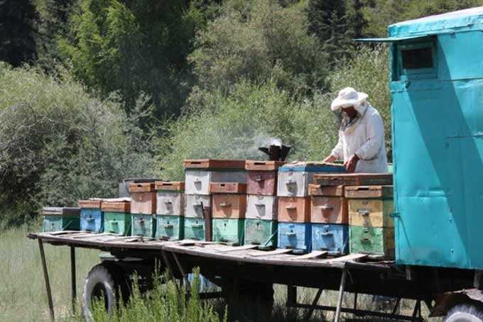 Movement – features and prospects for the beekeeper