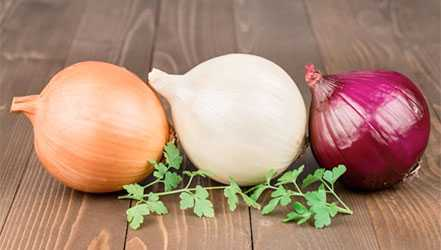 Onions, Calories, benefits and harms, Useful properties