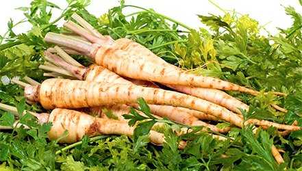 Parsley, Calories, benefits and harms, Useful properties