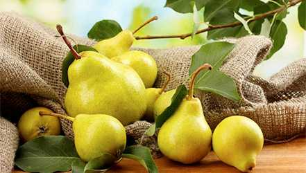 Pear, Calories, benefits and harms, Useful properties