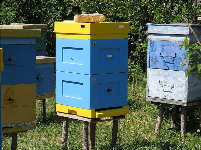 Polish hives Lyson