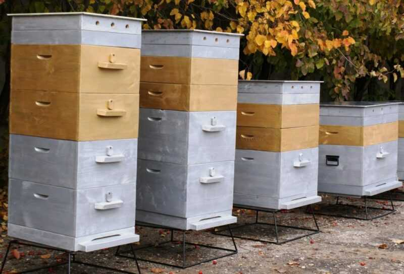 Popular types of bee hives