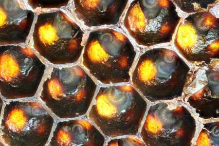 Proper feeding of bees in winter