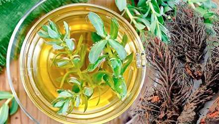 Red brush (Rhodiola), Calories, benefits and harms, Useful properties