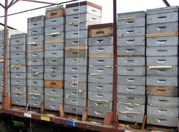 hives on the platform