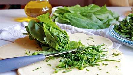 Sorrel, Calories, benefits and harms, Useful properties