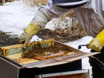 Spring feeding of bees: different types of feeding