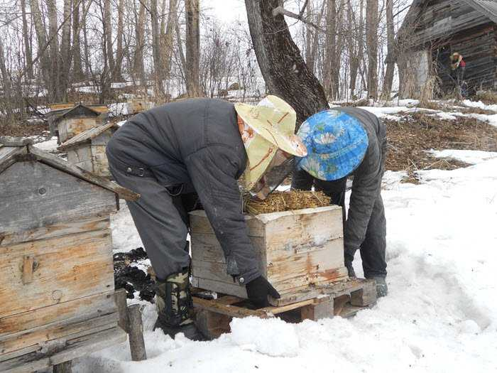 Spring work in the apiary in stages