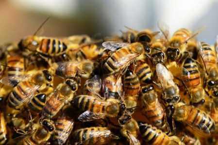Swarming bees: main causes and how to avoid it