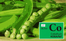 Trace element cobalt. Functions. Signs of Deficiency and Excess – Hydroponics
