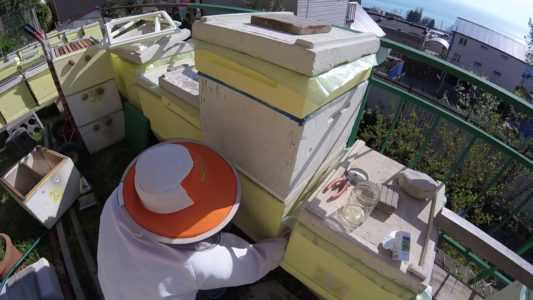 Two-queen bee keeping: methods and features