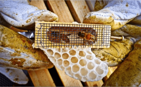 Ways to withdraw queen bees