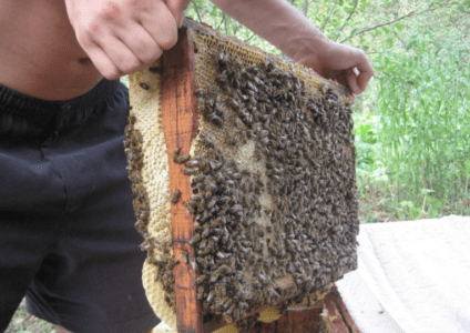 What are bee layering and how to make them?